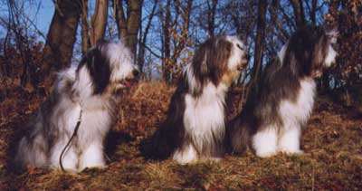 From the left: Jonna, Millie & Penny