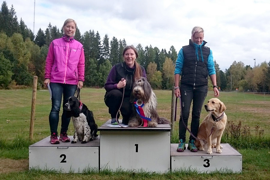 Izzie - bearded collie- vinner elitklass lydnad och blir lydnadschampion!!